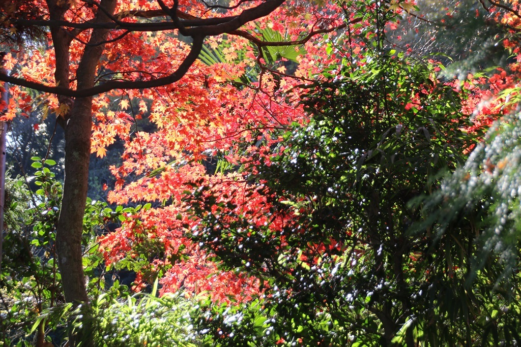 海蔵寺への道筋_2