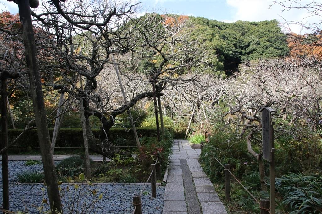 本堂前の庭(1)_1