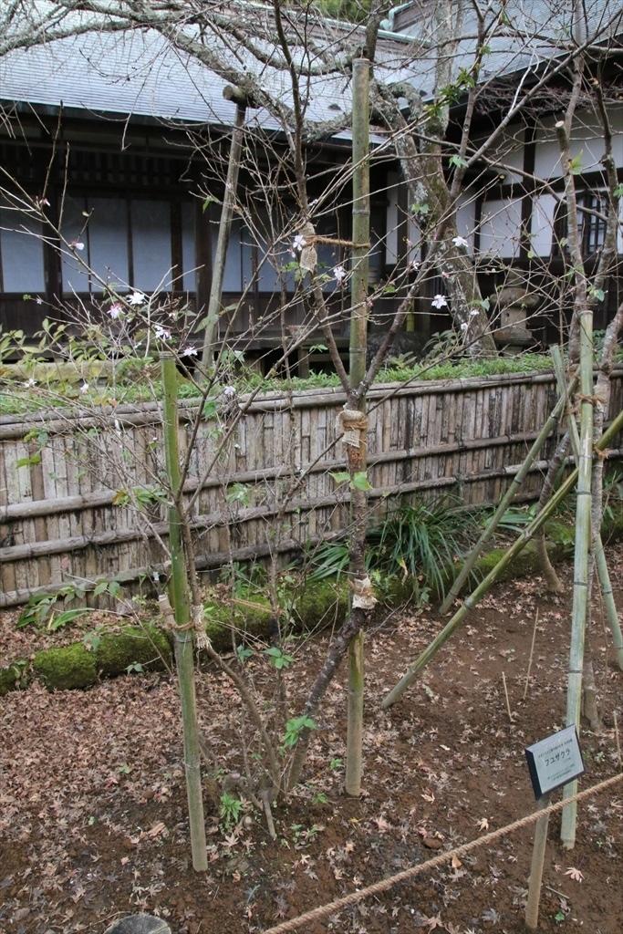本堂前の庭(1)_2
