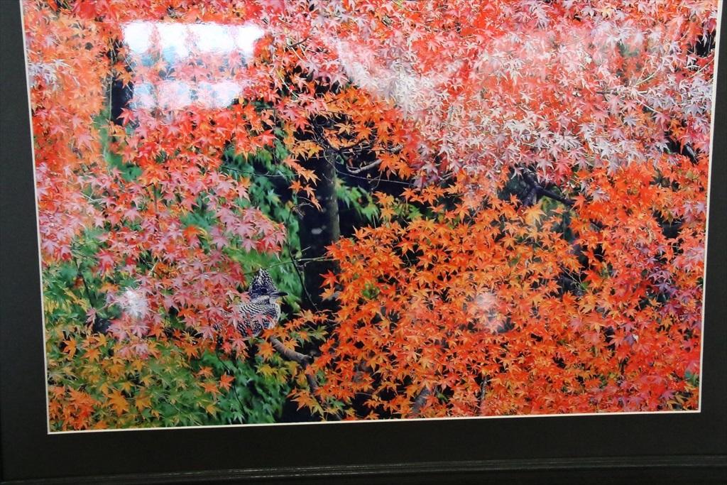 三田市の写真展から_2