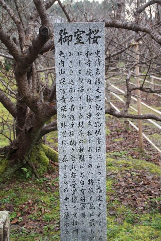 御室桜_2