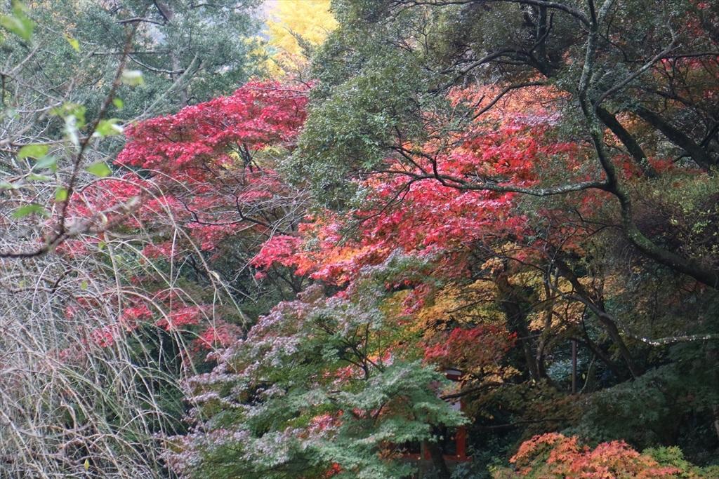 梅見の滝近辺の紅葉_1