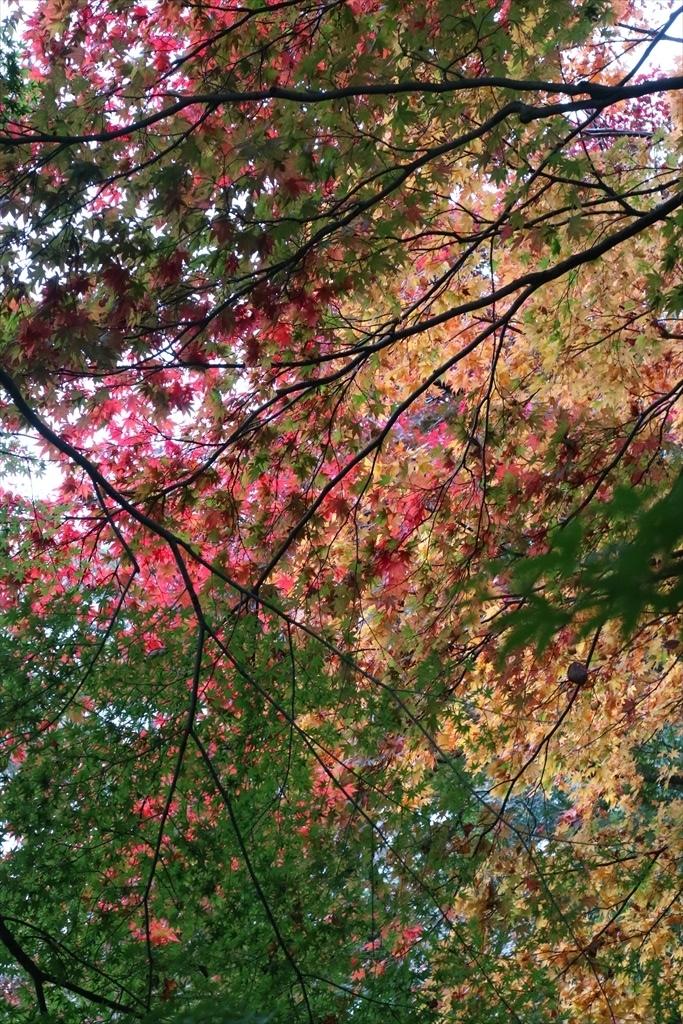 梅見の滝近辺の紅葉_4