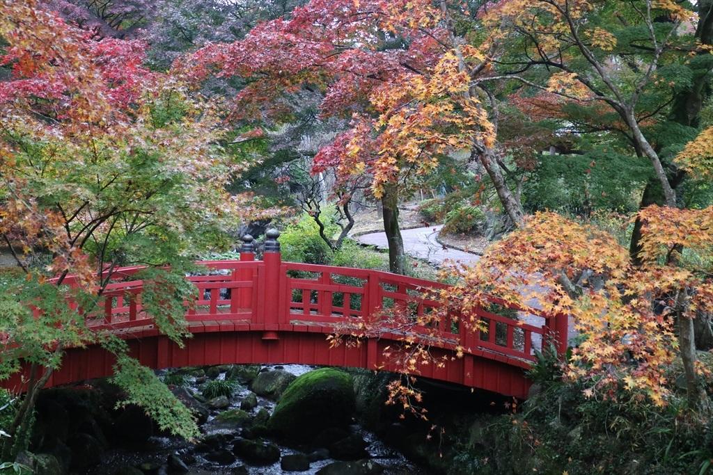 梅見の滝近辺の紅葉_8
