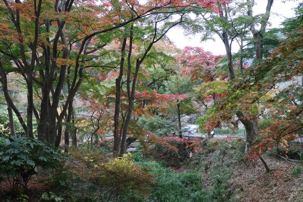梅見の滝近辺の紅葉_10