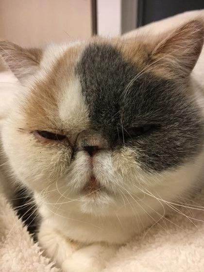 フミフミ中の顔