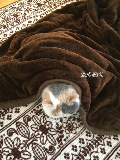 毛布掛けてます