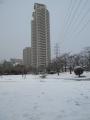 170115公園の高台からタワーマンションを望む