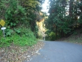 161203大正池ピークの向こうの木立に陽射し