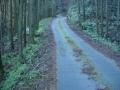 161203ジメジメした林道を抜けていく