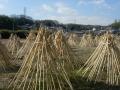 170204高山は茶筅の里。竹が干されている