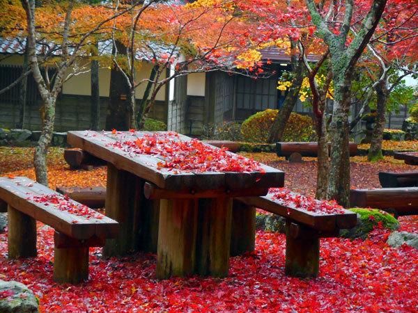 紅葉のテーブルと椅子