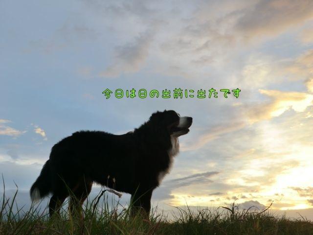 CIMG2312_201702071249382fb.jpg