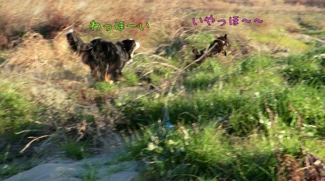 CIMG2435_2017020714031092b.jpg