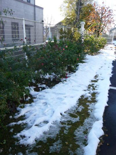 ブログ1126雪