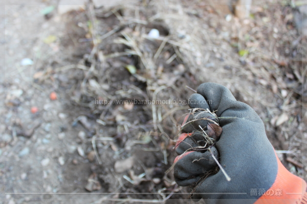 東 通路 庭作り 草むしり 20161206