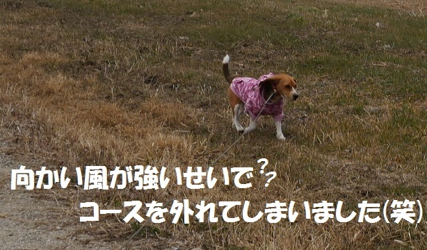 P1050472.jpg