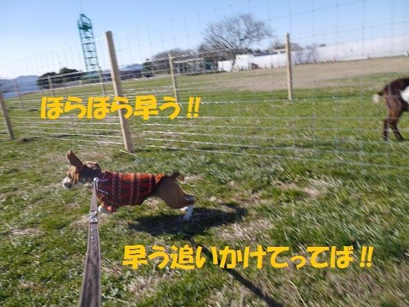 P2080950.jpg