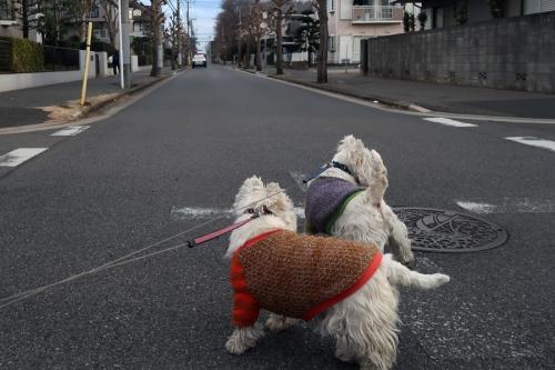 chitekikyouikuganguwokatta5.jpg