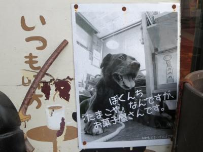 たまごや看板犬 (1)