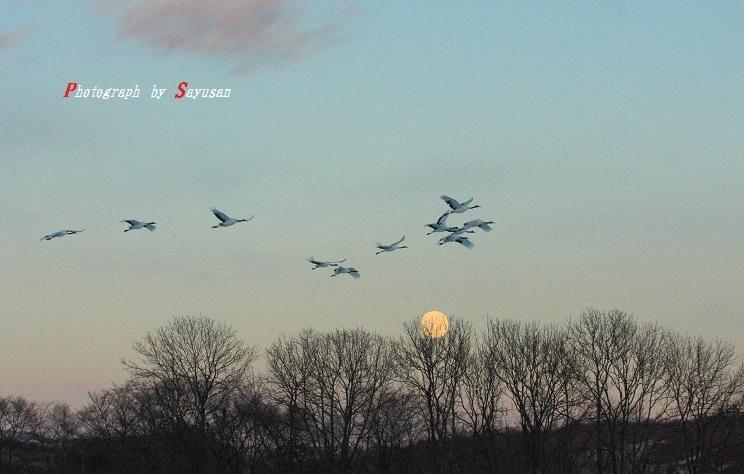 2011-1-19 満月を飛ぶ 021-B1-1