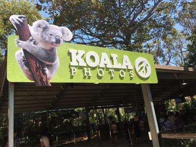koala4.jpg