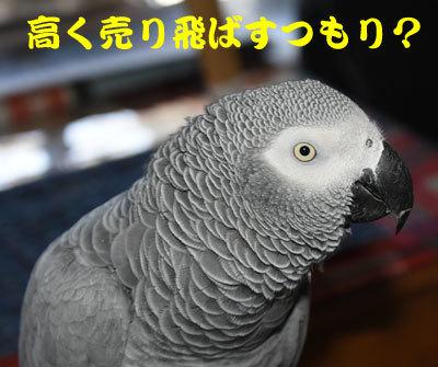 2_カンナ1
