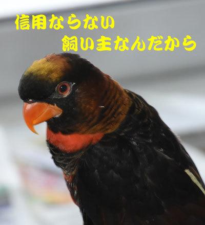 7_ピンナ