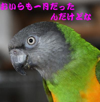 3_チャッピ誕生日