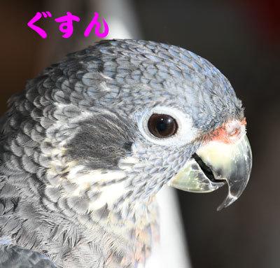 7_グスン