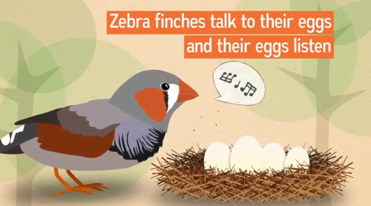 ZebraFinch01.jpg