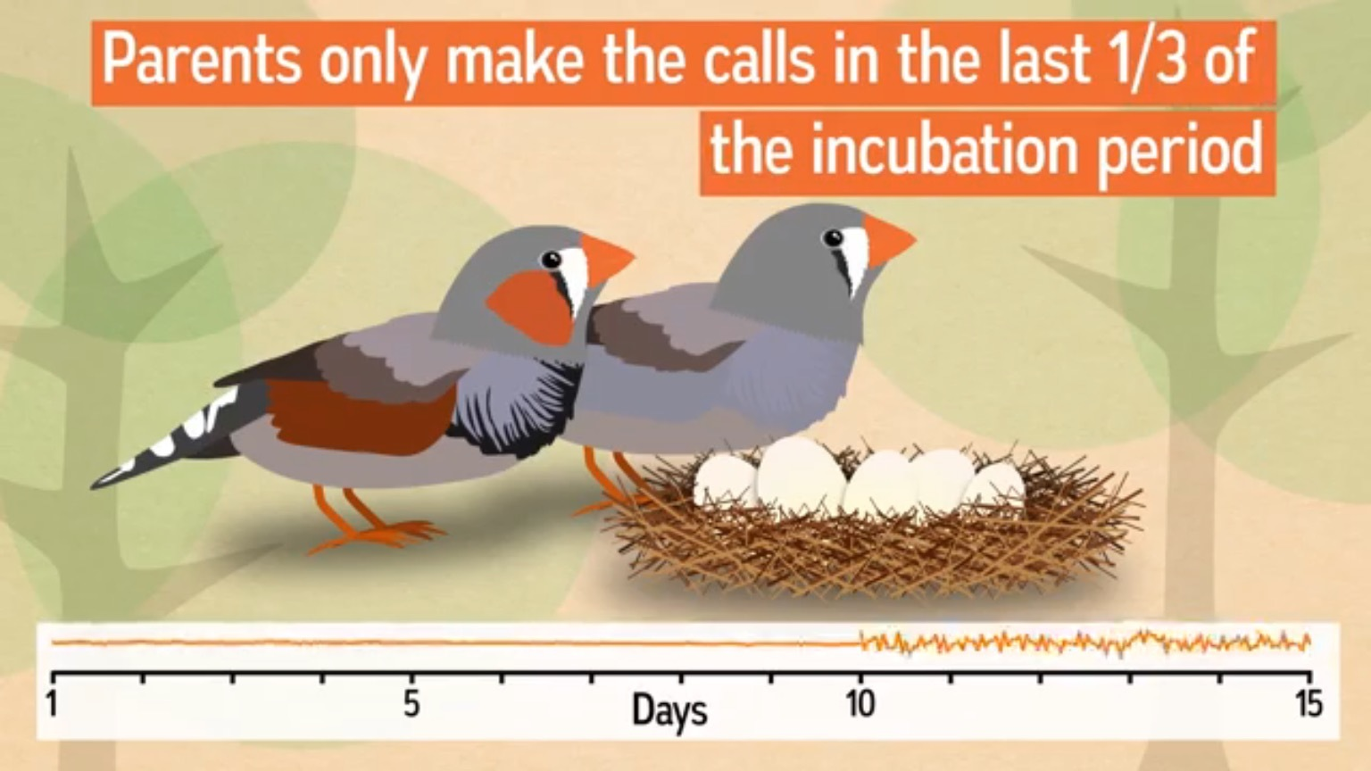 ZebraFinch12.jpg