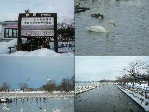 白鳥(3)