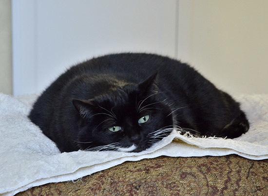 Cat Pie2blog