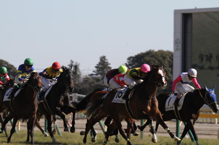 2017 モクレレ 新馬戦2