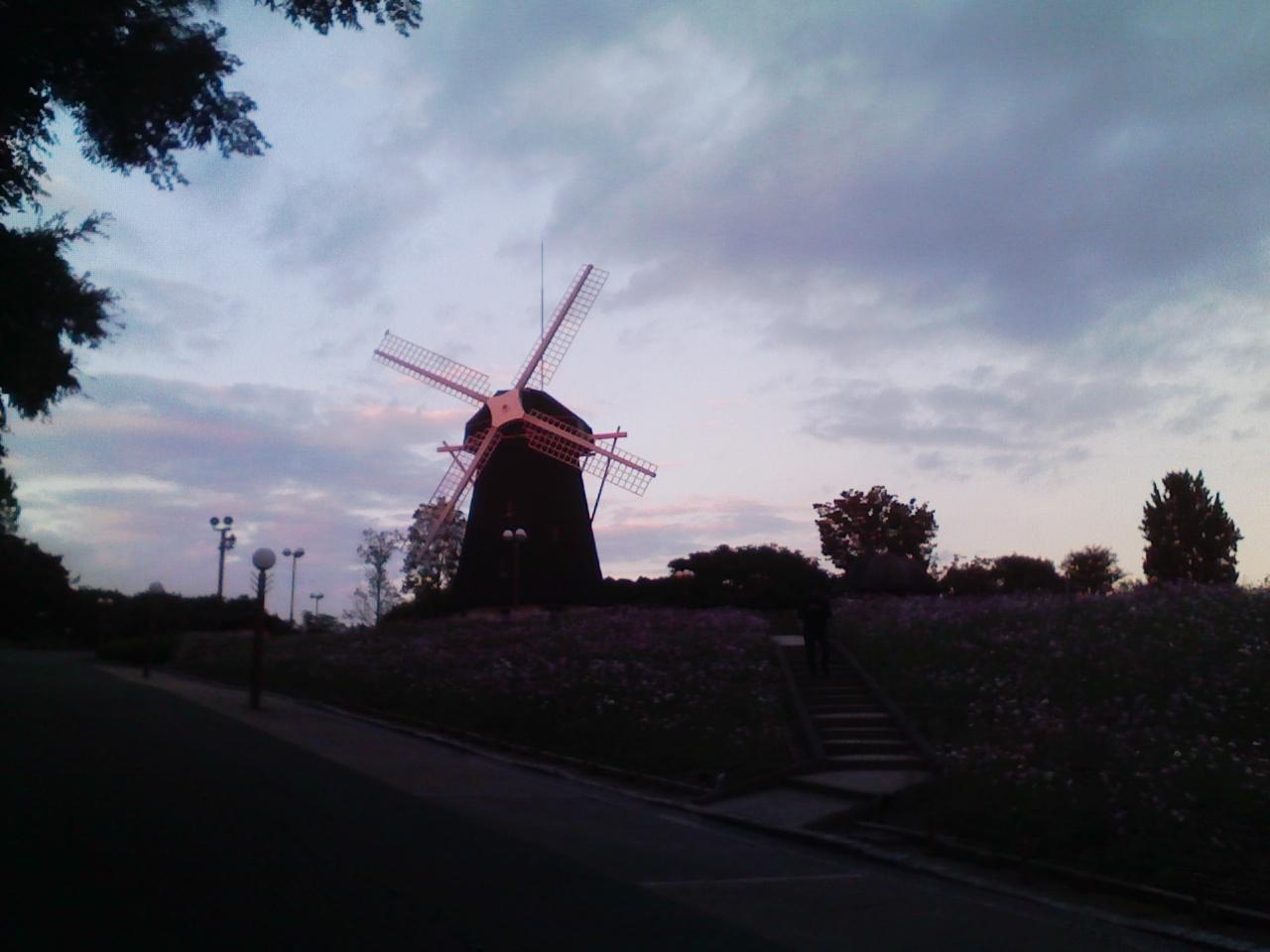風車とコスモス