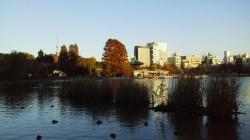 秋の不忍池