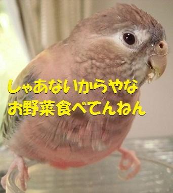 CIMG7060.jpg