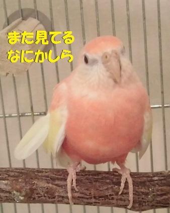 CIMG7096.jpg
