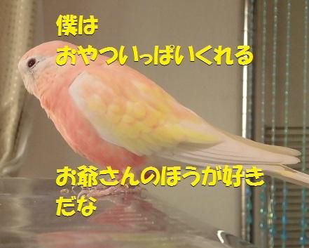 CIMG7320.jpg
