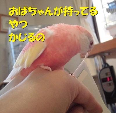 CIMG7356.jpg