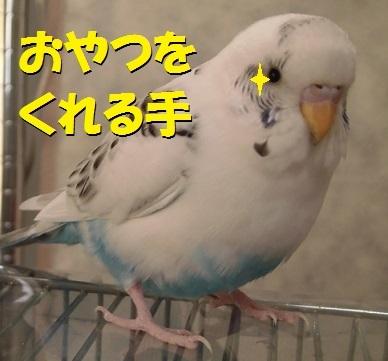 CIMG7435.jpg