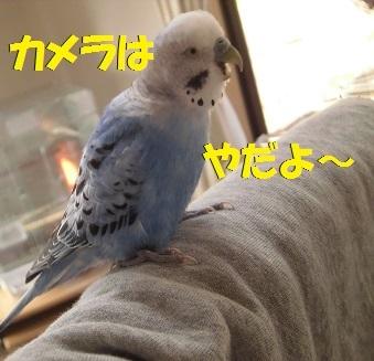 CIMG7438.jpg