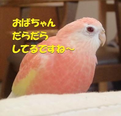 CIMG7474.jpg