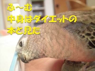 CIMG7475.jpg