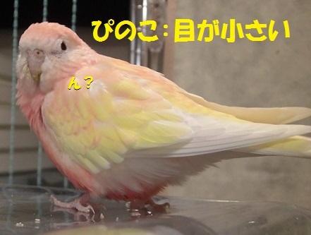 CIMG7614.jpg
