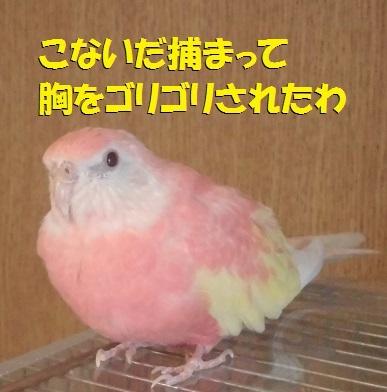 CIMG7632.jpg