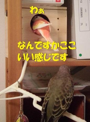 CIMG7636.jpg