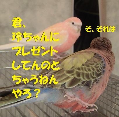 CIMG7713.jpg