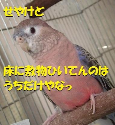 CIMG7734.jpg